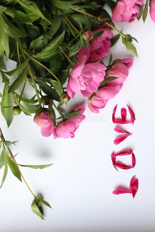 Pivoines roses de fleurs sur un fond blanc et les pétales aiment, amour de Word ont fait des pétales images libres de droits