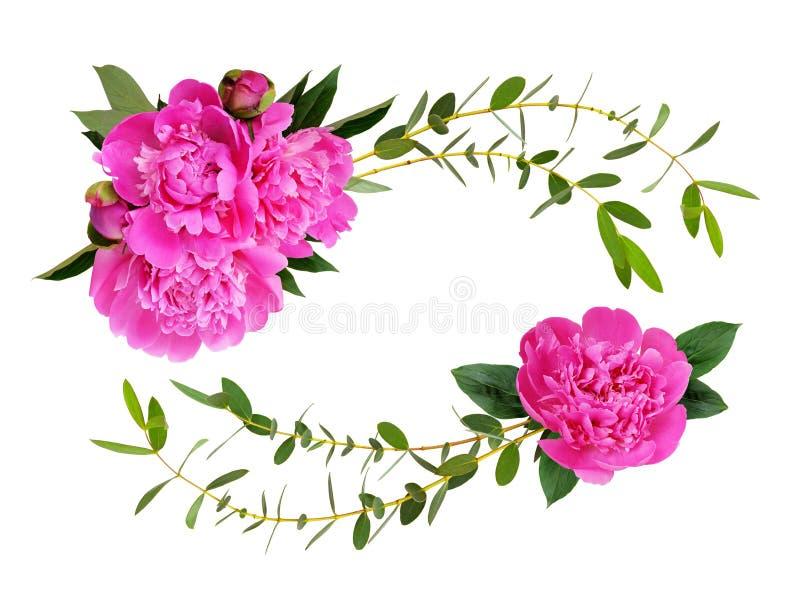 Pivoines roses et feuilles ecorative de vert d'eucalyptus dans l'arran de vague images libres de droits