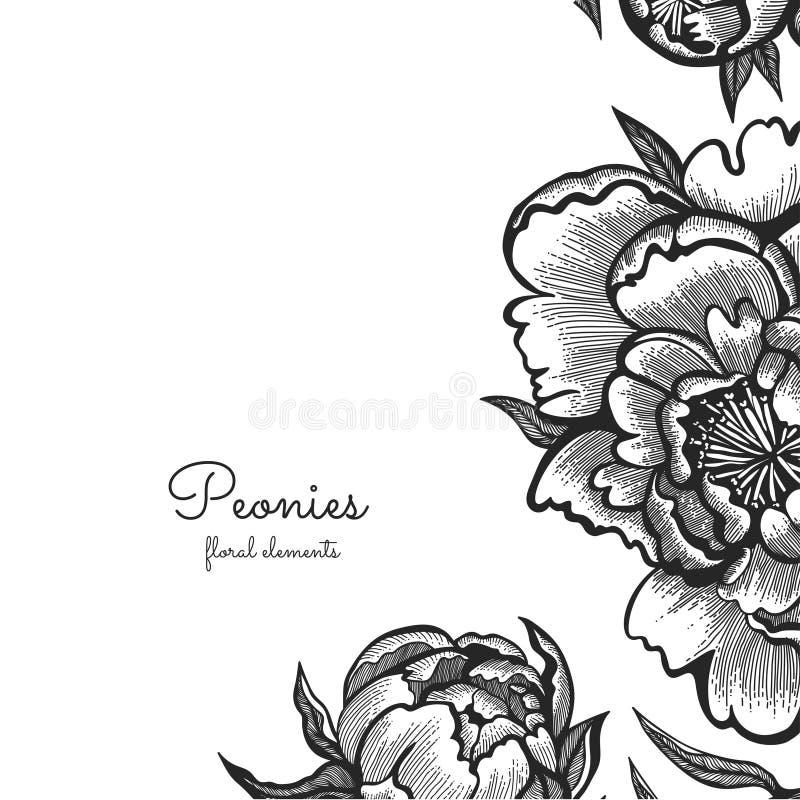 Pivoines tirées par la main de vintage Éléments de vecteur pour le calibre de conception Décor fleuri pour des invitations, épous illustration de vecteur