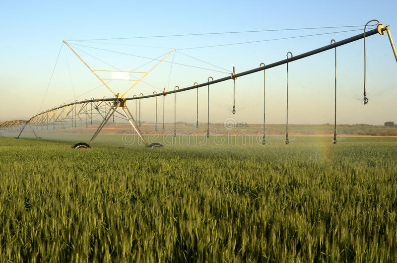 Pivot watering wheat fields. In late afternoon stock image
