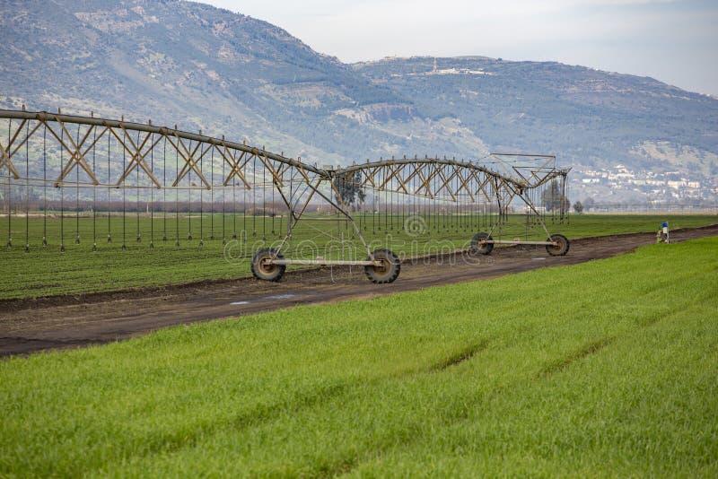 Pivot watering wheat fields. Pivot watering on wheat fields royalty free stock images