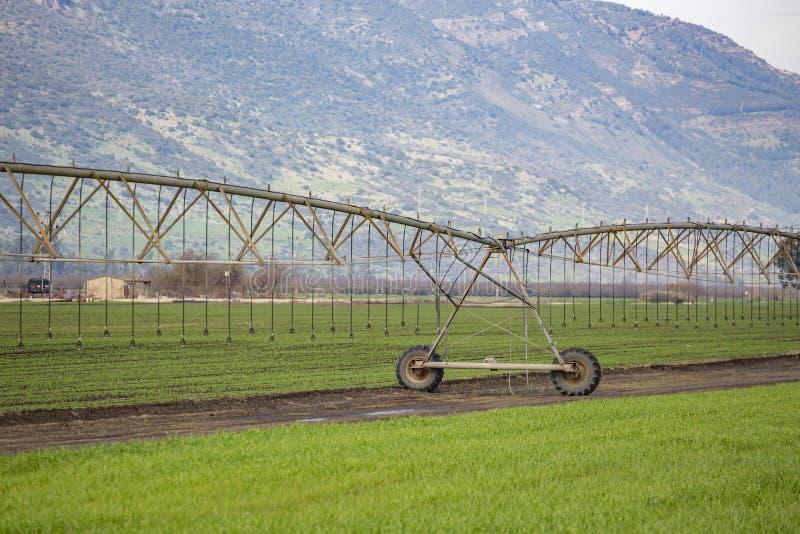 Pivot watering wheat fields. Pivot watering on wheat fields royalty free stock photo