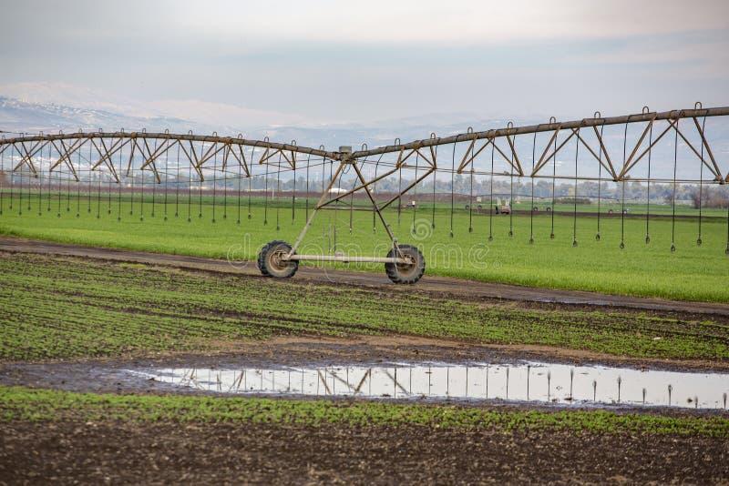 Pivot watering wheat fields. Pivot watering on wheat fields royalty free stock photos