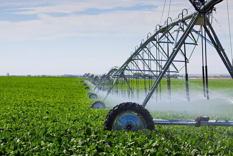 Pivote de la irrigación foto de archivo