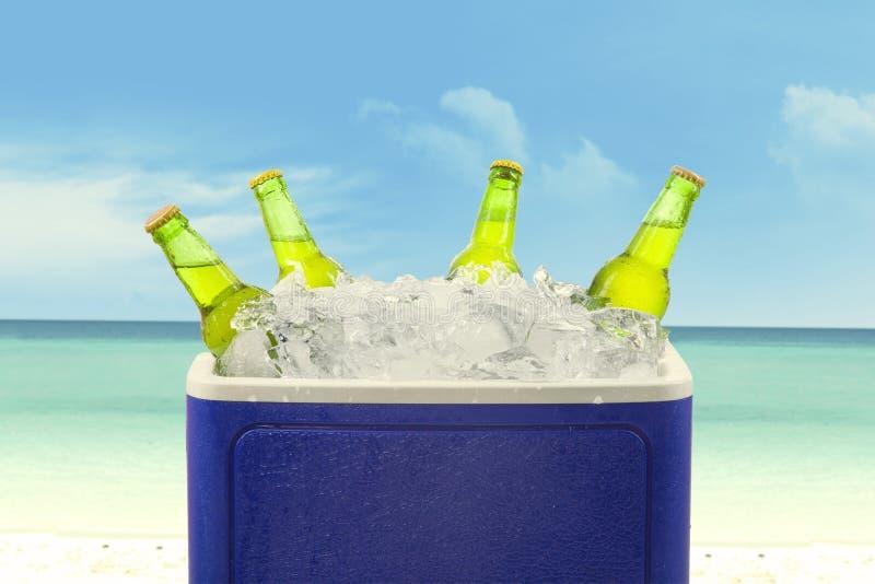 Piwne butelki w lodowym pudełku fotografia royalty free