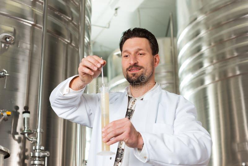 Piwny piwowar w jego browaru egzamininować obrazy royalty free