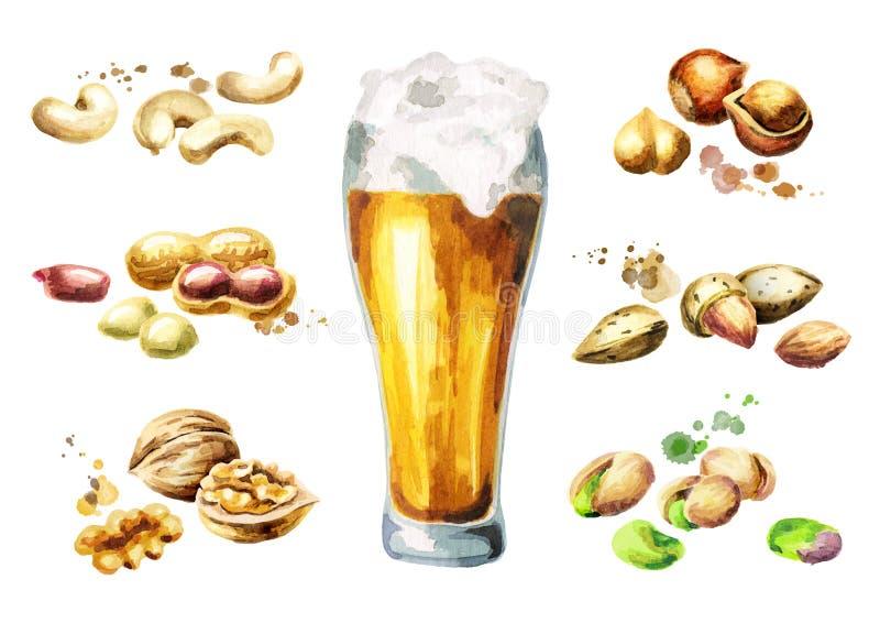 Piwo i dokrętki przekąszamy set z pistacją, arachidami, migdałami, orzechami włoskimi, nerkodrzewami i hazelnuts, akwarela ilustracja wektor