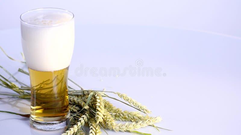 Piwo nalewa w szkło na białym tle z A wiązką banatka obraz stock