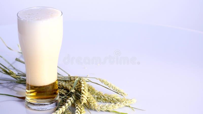 Piwo nalewa w szkło na białym tle z A wiązką banatka zdjęcia stock