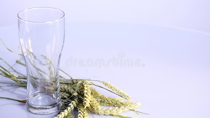 Piwo nalewa w szkło na białym tle z A wiązką banatka zdjęcie stock