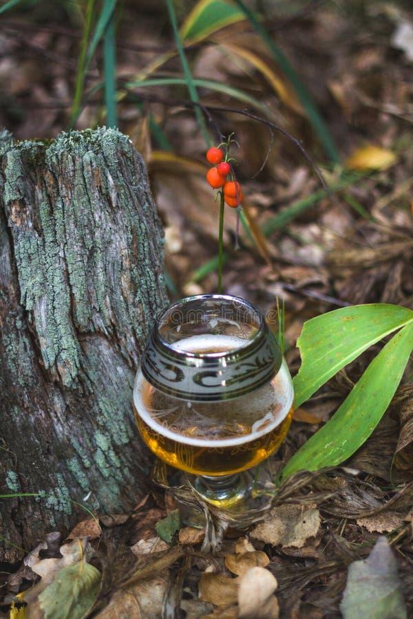 Piwo w lesie z jagodami obraz stock