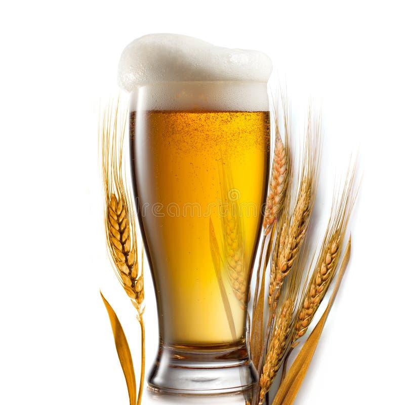 Piwo w szkle i banatce odizolowywających na bielu obraz stock
