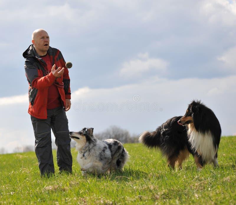 Pizca del hombre dos perros. imagen de archivo