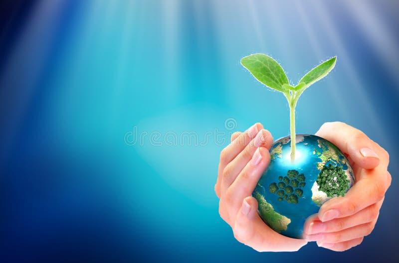 Plántula de Team Work Cupping del negocio adulto de las manos y Nurture del sembrador para crecer ambiental y para reducir la tie imagenes de archivo