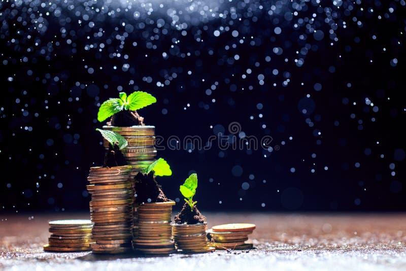 Plántula en suelo en el top de la pila de la moneda, fondo negro, aislado, inversión, concepto del crecimiento del negocio, espac fotografía de archivo