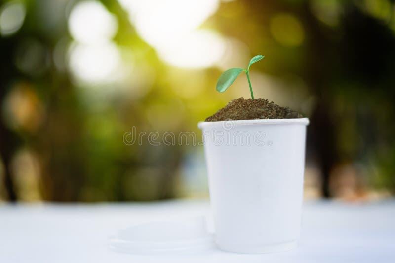 plántula que crece en taza de papel del café en la salida del sol foto de archivo libre de regalías