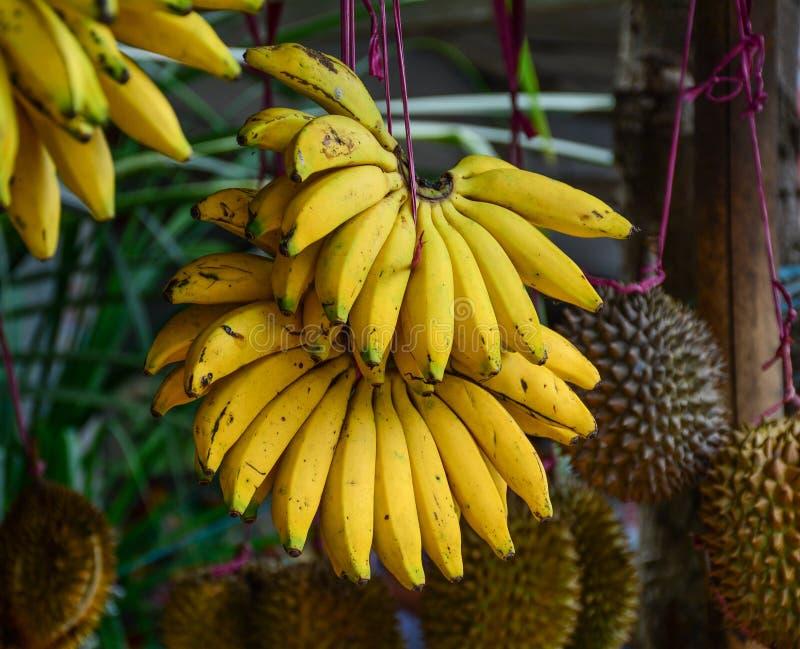 Plátano cultivado para la venta al por menor imagenes de archivo