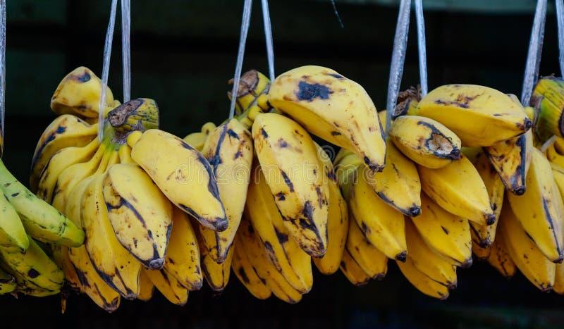 Plátano cultivado para la venta al por menor en el mercado local imágenes de archivo libres de regalías