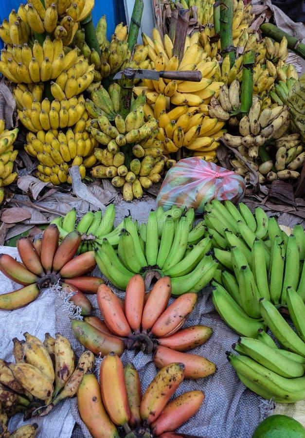 Plátano cultivado para la venta al por menor en la mercado de la fruta foto de archivo libre de regalías