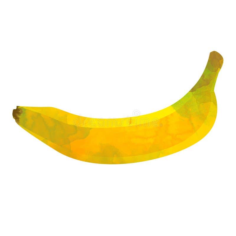 Plátano de la fruta tropical aislado en el fondo blanco fotografía de archivo