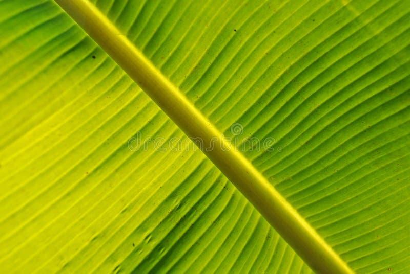 Plátano de los puntos amarillos imagen de archivo libre de regalías