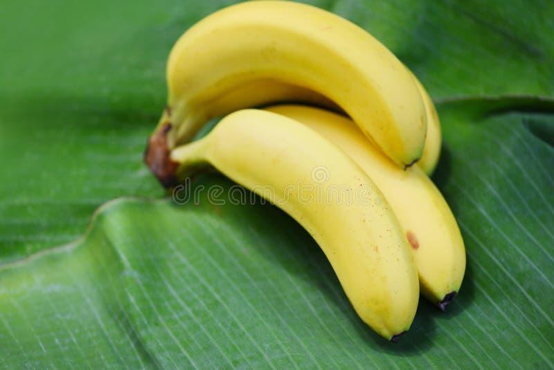 Plátano en el fondo de la hoja del plátano en el verano foto de archivo libre de regalías