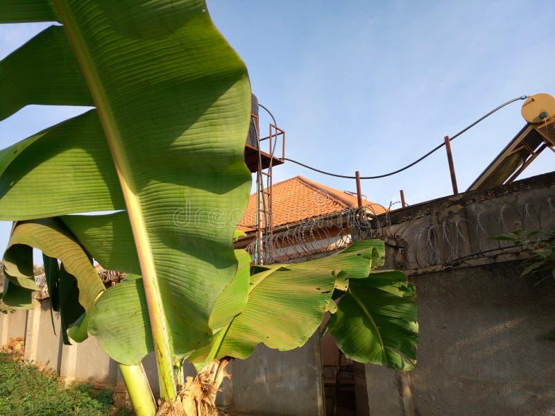Plátano, Kampala, Uganda foto de archivo libre de regalías