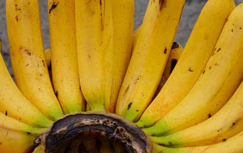 Plátano para la venta en el mercado fotos de archivo libres de regalías