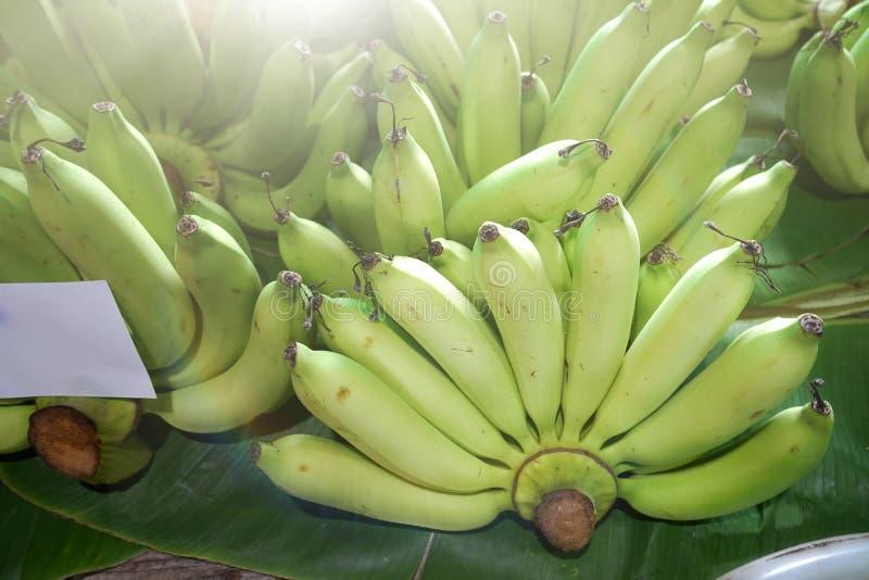 Plátano verde imagen de archivo libre de regalías