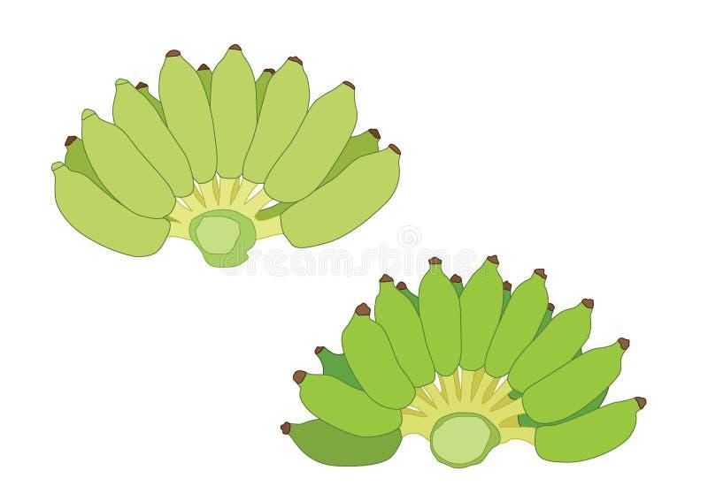 Pl?tano verde del color y pl?tanos crudos ilustración del vector