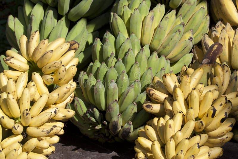 Plátano verde y amarillo imágenes de archivo libres de regalías