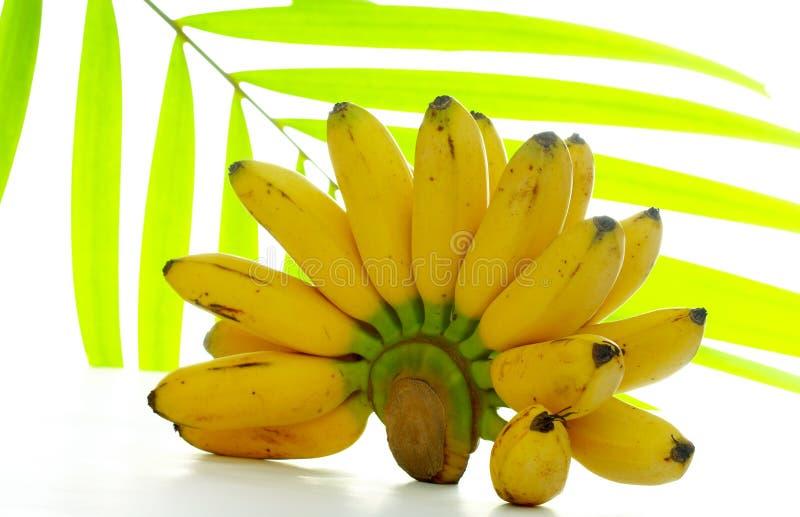 Plátano y hoja de palma imagen de archivo
