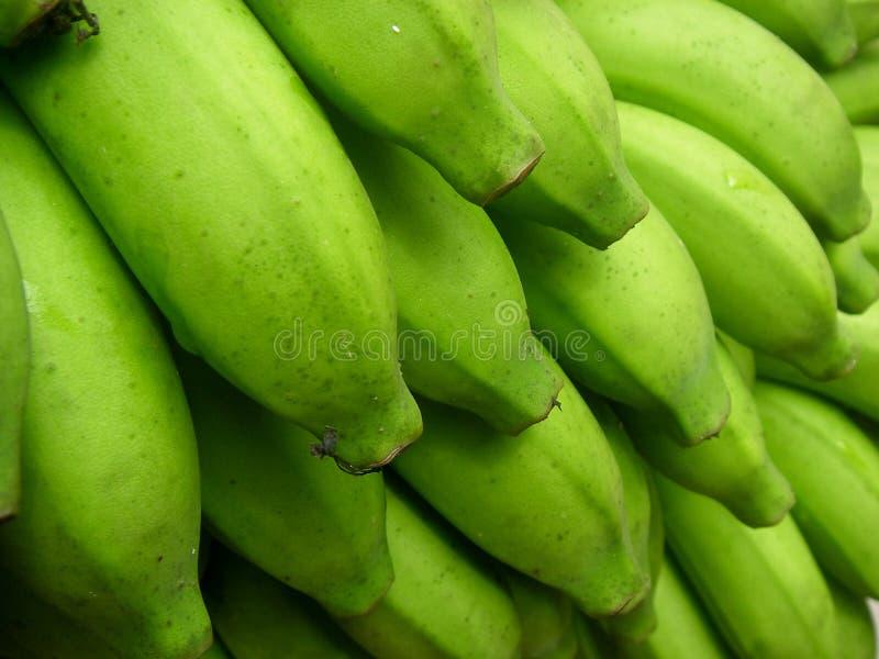 Download Plátanos imagen de archivo. Imagen de campo, tropical - 1292147
