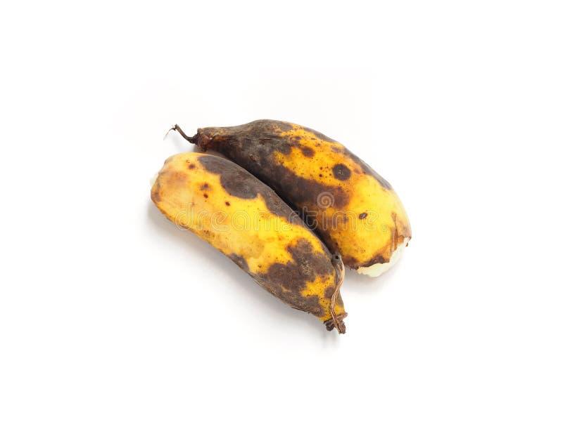 Plátanos putrefactos o malsano demasiado maduro de los plátanos aislados en el fondo blanco Punto fungoso y negro en la cáscara d fotografía de archivo libre de regalías