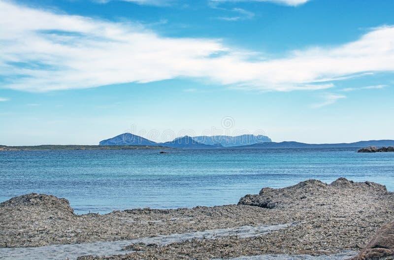 Plâncton vegetal na praia do inverno em Costa Smeralda Sardinia Italy foto de stock