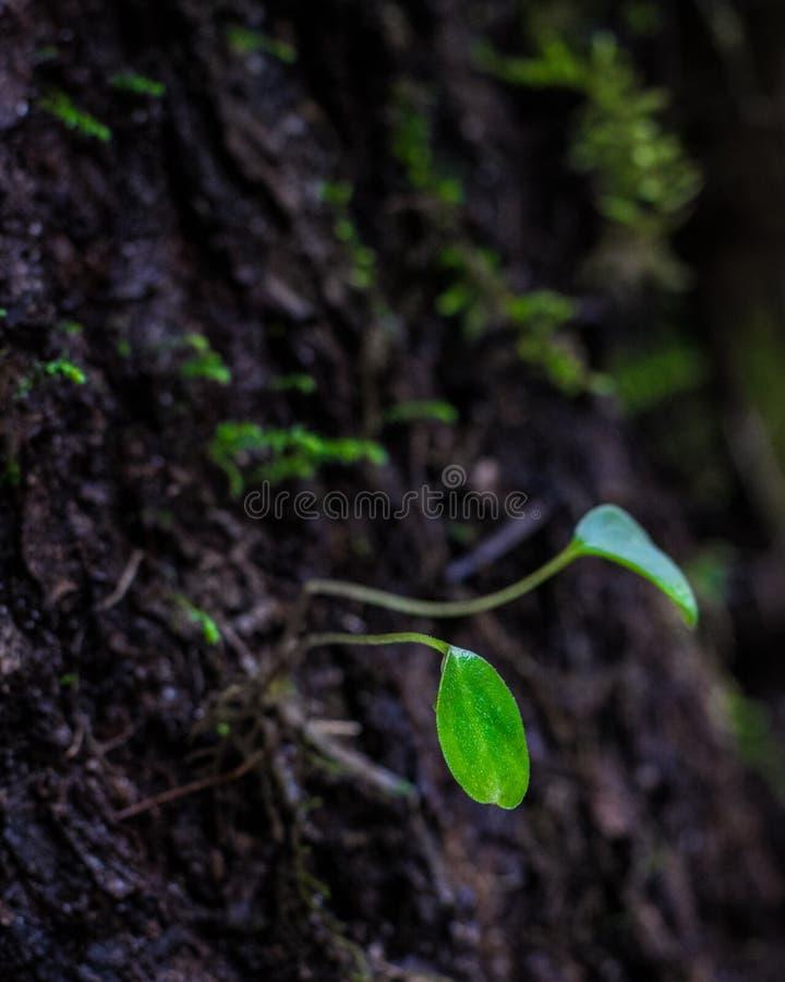 Plântula que cresce fora de uma árvore imagens de stock royalty free