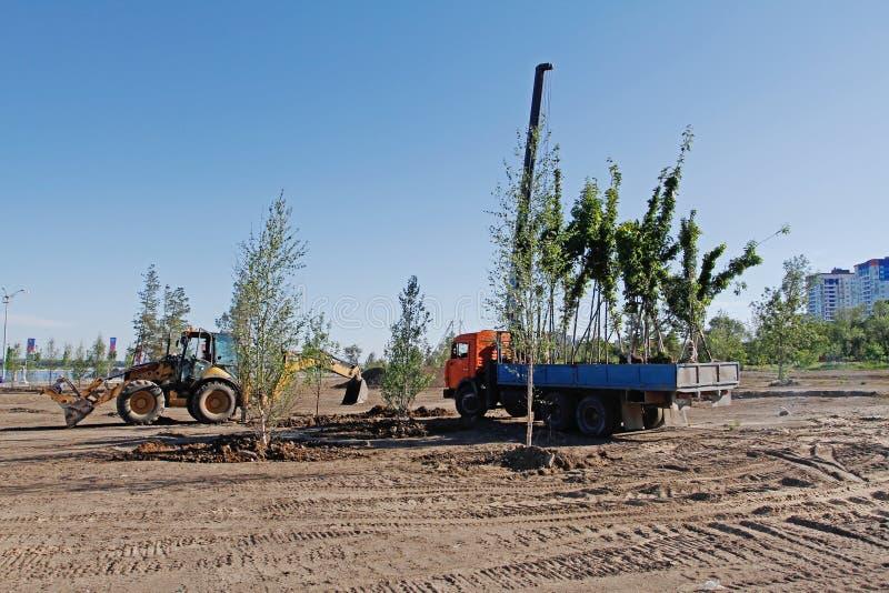 Plântulas da árvore em um caminhão pronto para plantar em um parque da cidade em Volgograd fotografia de stock royalty free
