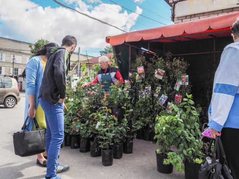 Plântulas de compra no mercado dos fazendeiros Rússia Gatchina outono 2017 foto de stock royalty free