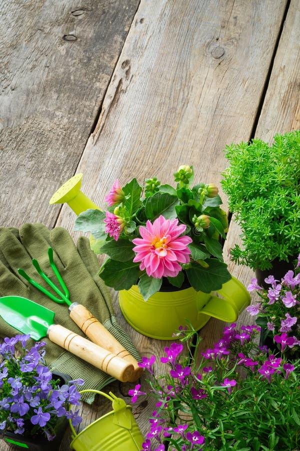 Plântulas de flores do jardim em uns vasos de flores Equipamento de jardim: lata molhando, p?, ancinho, luvas Vista superior fotos de stock