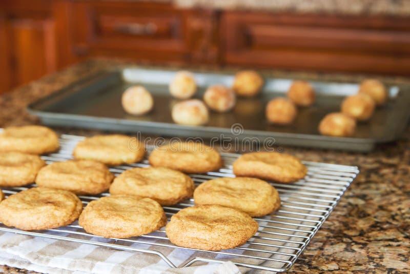 Plätzchen auf einem Backblech bereit, in Ofen und in das gebackene Plätzchenabkühlen einzusteigen; lizenzfreie stockbilder