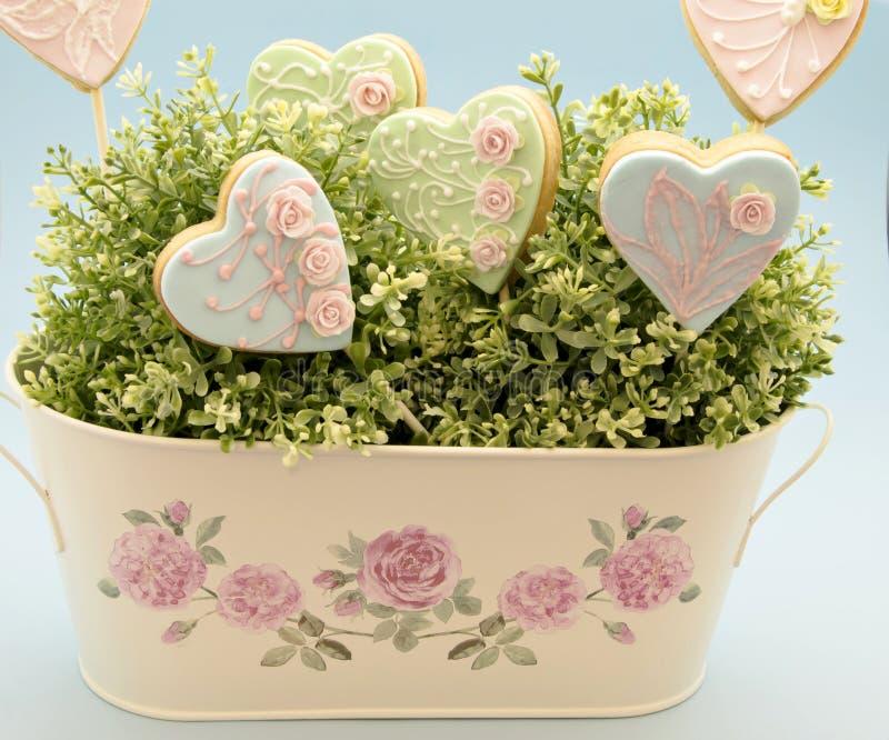 Plätzchenblumen stockfotos