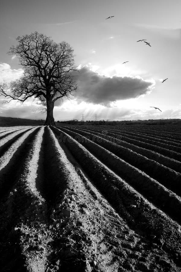 plöjt fält fotografering för bildbyråer