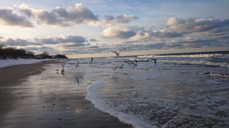 Plaża stock photo