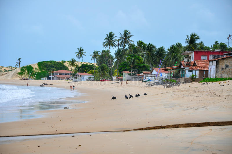 Plaża, Pititinga, Natal (Brazylia) obraz royalty free