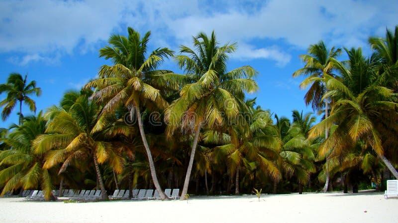 Plaża przy Punta Cana zdjęcia royalty free
