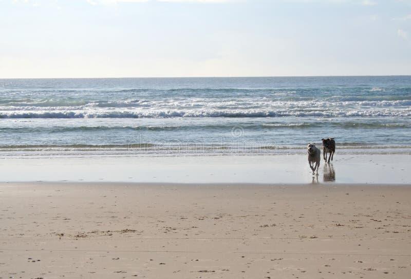 plaża psa, zdjęcia royalty free