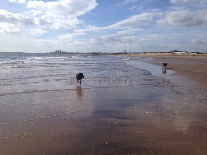 plaża psa, zdjęcie royalty free