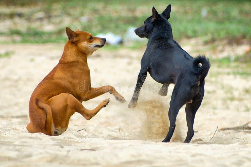 Plaża psy fotografia stock