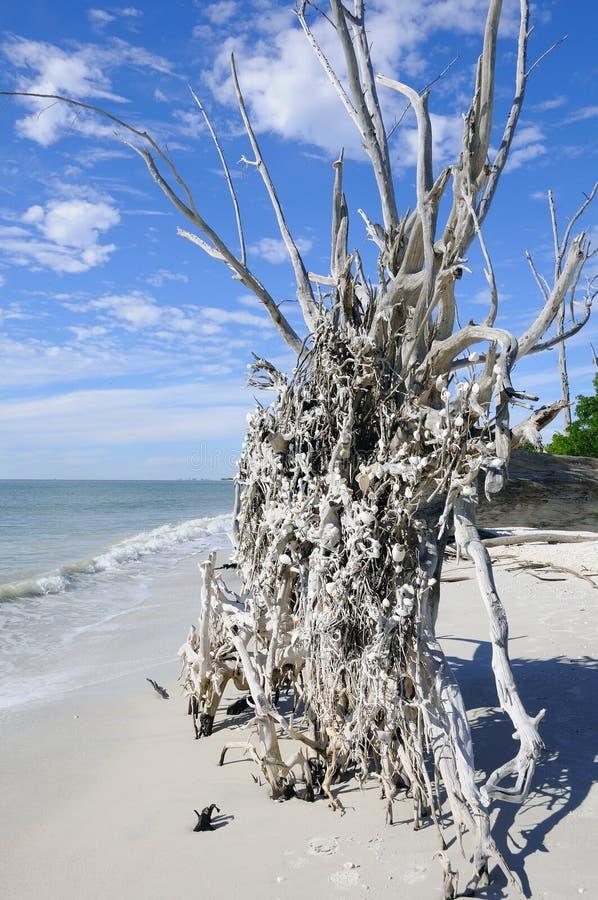 plaża spadać drzewo obrazy stock