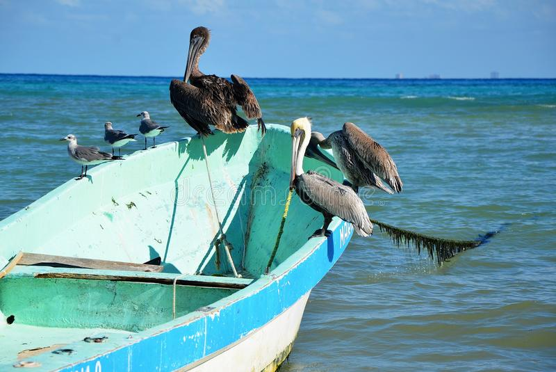 Plaża w playa del carmen, Meksyk obrazy stock